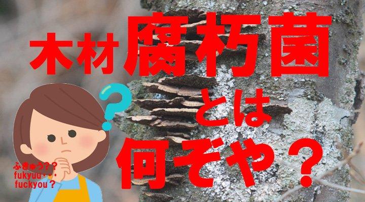投稿2717腐朽菌とは何ぞや?のアイキャッチ