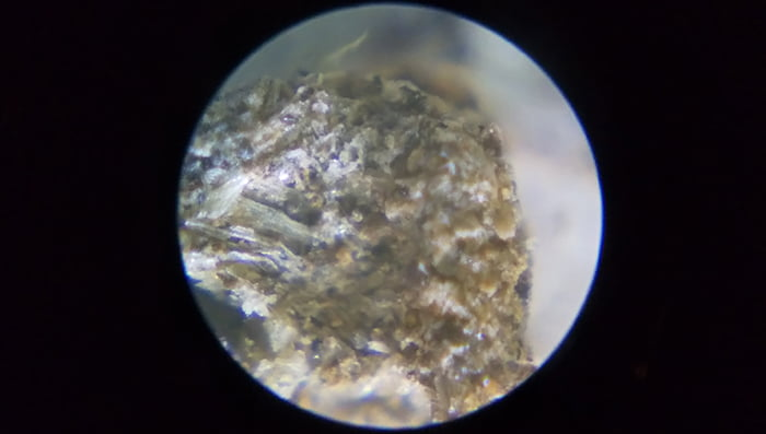 RXT300Yで拡大したダンゴ虫の糞を撮影した写真画像