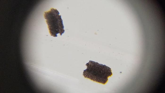 スマホに拡大レンズを取り付けて撮影した「黒っぽい粒」の写真画像