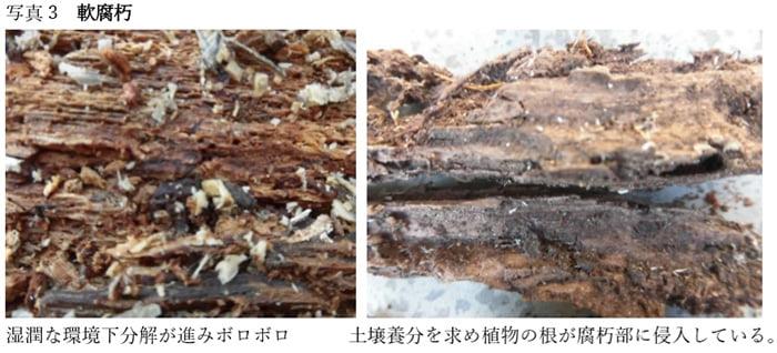コラム「木材腐朽菌の多様性」からの引用させて頂いた写真画像③軟腐朽