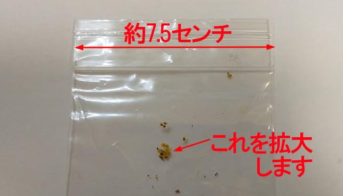 方杖部分に付着していた小粒をビニール袋に入れて撮影した写真画像(コメント入)