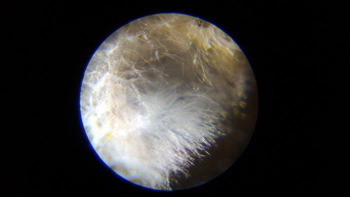 1Fデッキ周りで発見されたカビと思われる綿毛を撮影した写真画像①