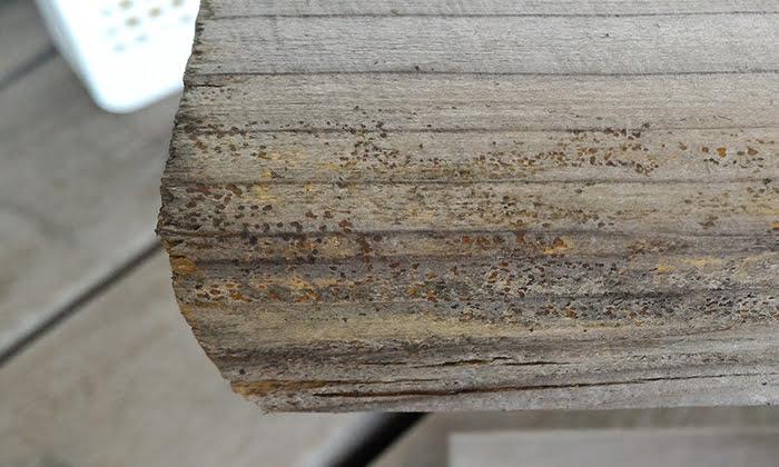 除去テスト後、概ね24時間経過したキノコ(菌類)の1Fウッドデッキのベンチ脚の繁殖状況を撮影した写真画像