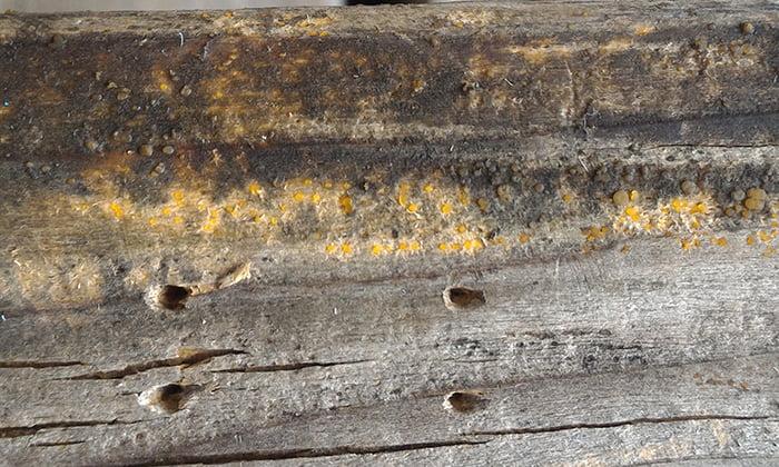 除去テストB直前のキノコ(菌類)のベンチ脚の繁殖状況を撮影した写真画像2(少し拡大)