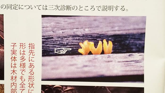 「木製外構材のメンテナンスマニュアル」P16の右上に掲載されている写真を撮影した写真画像