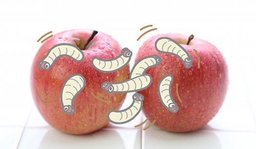 リンゴの挿絵2(写真画像)にウジ虫のイラストを重ねた画像