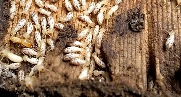 挿絵:シロアリの巣をイメージさせる画像