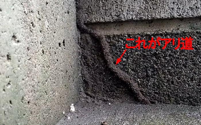 緑矢視「この辺り」で見つかった二本目のアリ道を撮影した写真画像(シロアリにキンチョールを掛けてみた箇所)