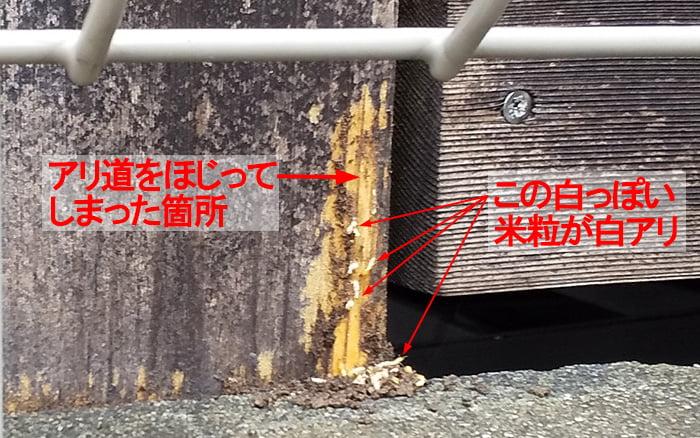 シロアリを発見した箇所を撮影した写真画像