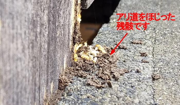 シロアリ(白蟻)被害個所を西側から撮影:蟻道をほじくってしまった後の拡大写真画像