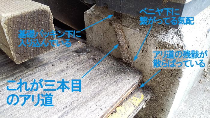 三本目のアリ道(蟻道)を撮影した解説コメント入り写真画像