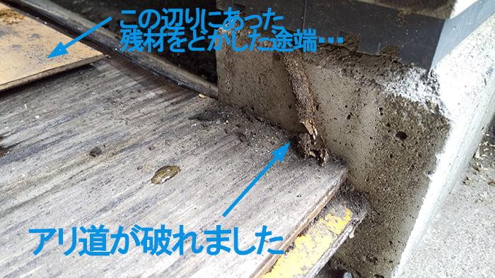 アリ道が不意に破れた様子を撮影したコメント入り写真画像