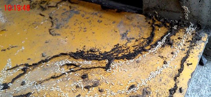 アリ道③付近の10:19:48ほどの様子を撮影した写真画像 ※シロアリの巣の見直し分析&検証画像21