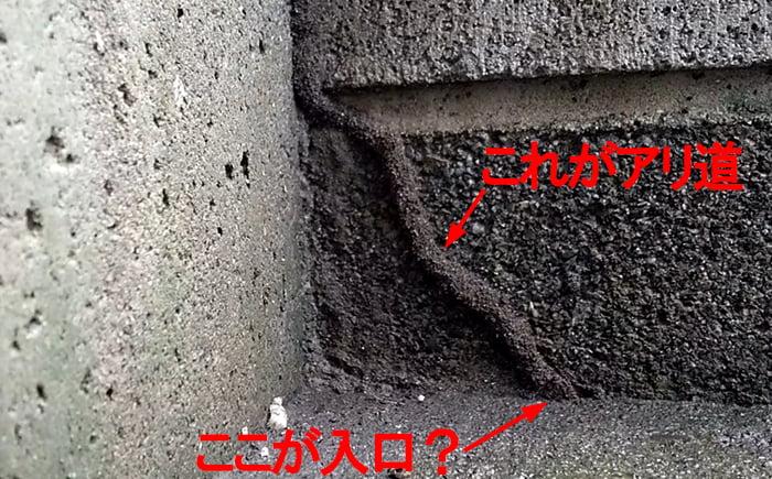 アリ道②の除去前を撮影した写真に解説用コメントを入れた画像 ※シロアリの巣の見直し分析&検証画像8