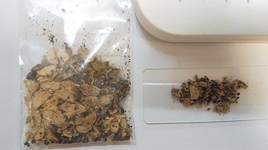 シロアリ被害箇所付近から採取したオガ屑を机上にて撮影した写真画像