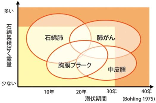 アスベスト疾病の潜伏期間を示したグラフ画像:国交省サイトから引用 https://www.mlit.go.jp/jutakukentiku/build/Q&A/index.html#a13