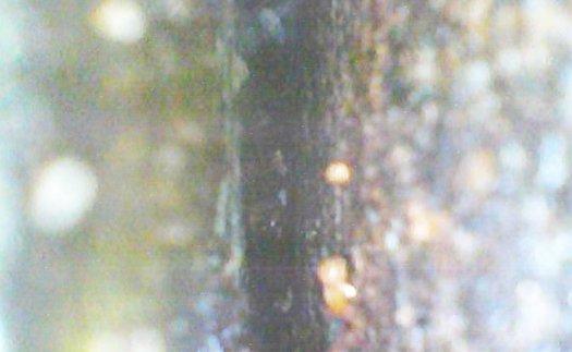 ファイバースコープで撮影した隙間の様子の写真画像 ※シロアリ被害箇所付近でのDIY駆除成果確認画像