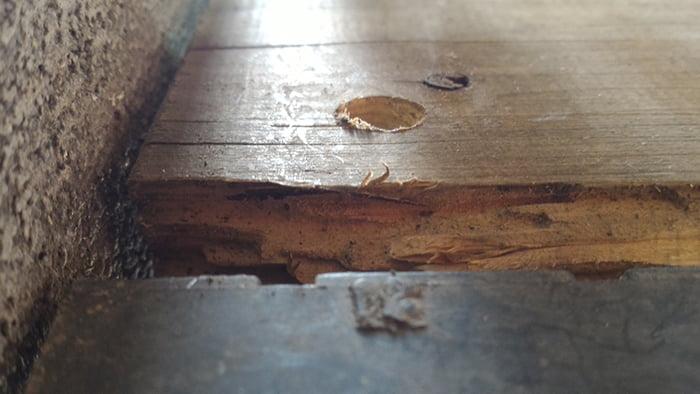 穴らしきモノが写っていた箇所を改めて再撮影した写真画像2(シロアリ被害部)