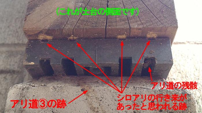 基礎パッキン妻面全体(下からの見上げ)のアリ道の痕跡と加害部を撮影した写真画像 ※シロアリ被害箇所付近でのDIY駆除成果確認画像6