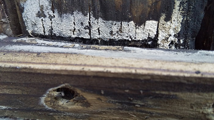 腐朽菌とみられるデッキ部材の異変を撮影した写真画像