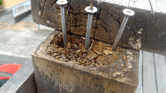 2Fのデッキ部材に見られる木材腐朽菌の仕業と思われる腐朽部分を撮影した写真画像