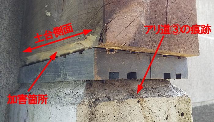 シロアリ被害箇所全巾とアリ道③の痕跡を撮影した写真画像 ※白蟻による被害(シロアリ被害)の解説用写真画像4