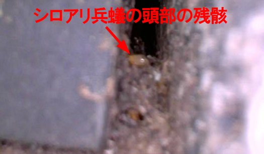 シロアリ駆除後の様子を撮影した写真画像