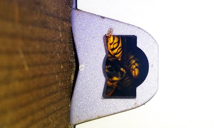 左の穴でフン詰まり状態のアシナガバチ達を撮影した写真画像