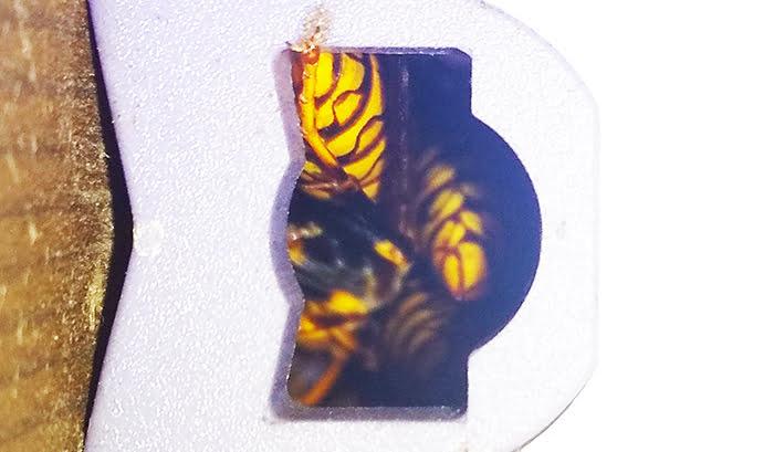 前掲の左の穴でフン詰まり状態のアシナガバチ達を撮影した写真画像を拡大し補正した画像