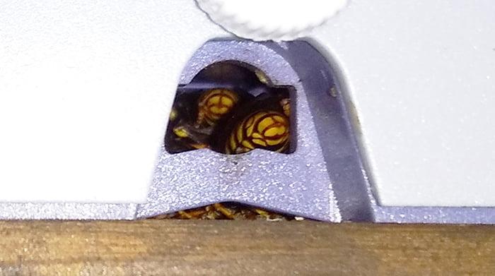 防犯灯の下の穴のアシナガバチの様子を撮影した写真画像の拡大