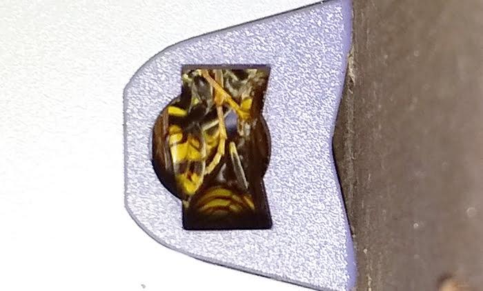 防犯灯の右の穴のアシナガバチの様子を撮影した写真画像の拡大