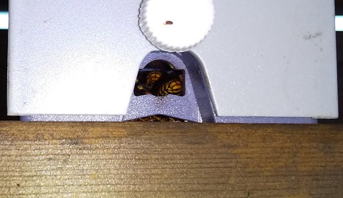 防犯灯の下の穴のアシナガバチの様子を撮影した写真画像