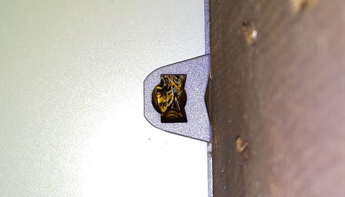 防犯灯の右の穴のアシナガバチの様子を撮影した写真画像