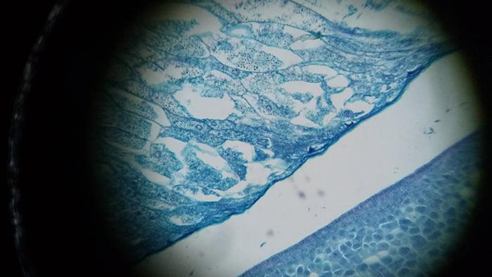 maxlapterの顕微鏡 2000倍「WR851-2」で撮影した試料①「Zea Seed」拡大写真1:100倍