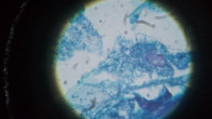 maxlapterの顕微鏡 2000倍「WR851-2」で撮影した試料①「Zea Seed」拡大写真3:1000倍