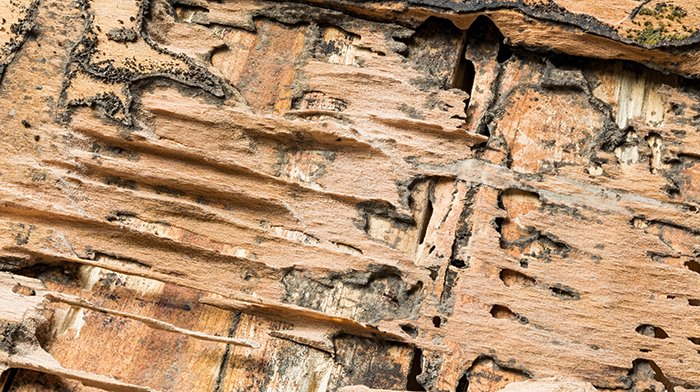 シロアリによる被害を受けたボロボロの合板を撮影した写真画像 ※シロアリ被害の見つけ方解説用画像5