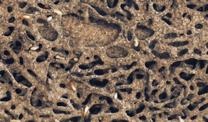 挿絵:シロアリ被害に遭った木材の写真画像