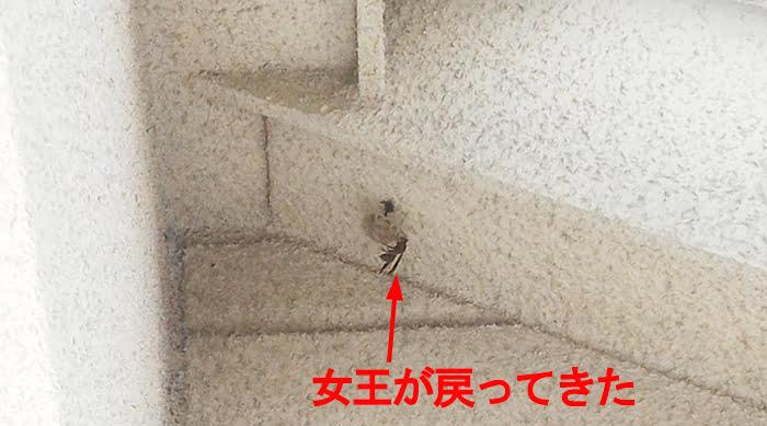 2019年5月のアシナガ蜂の巣を撮影したコメント入り写真画像03近景:2Fウッドデッキ上