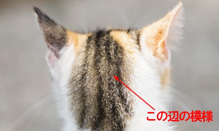 モフモフの蛾の頭部模様から思い出したネコの頭を撮影したコメント入り写真画像 ※モフモフの毛が生えたショッキングピンクの蛾の解説画像05