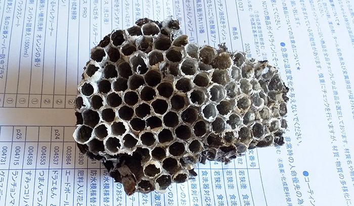 2020年5~10月のアシナガ蜂の巣を撮影した写真画像03近景表:撤去後の机上