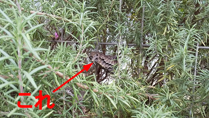 2020年5~10月のアシナガ蜂の巣を撮影したコメント入り写真画像01中景:1Fウッドデッキ脇