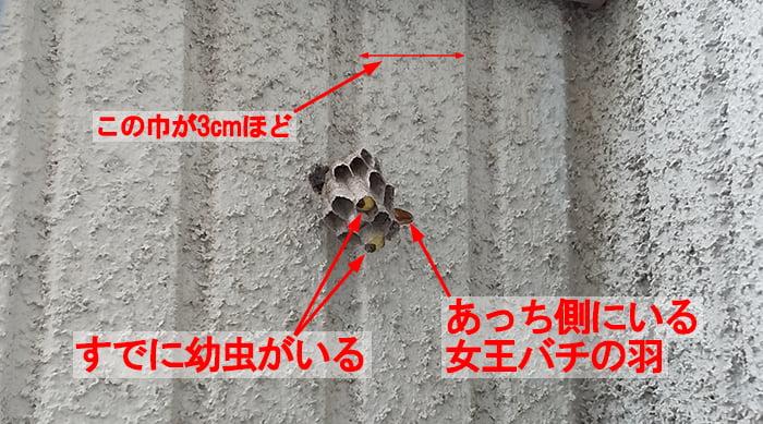 2021年5月②のアシナガ蜂の巣を撮影したコメント入り写真画像02斜め下やや近景 :2Fウッドデッキのバルコニー手摺
