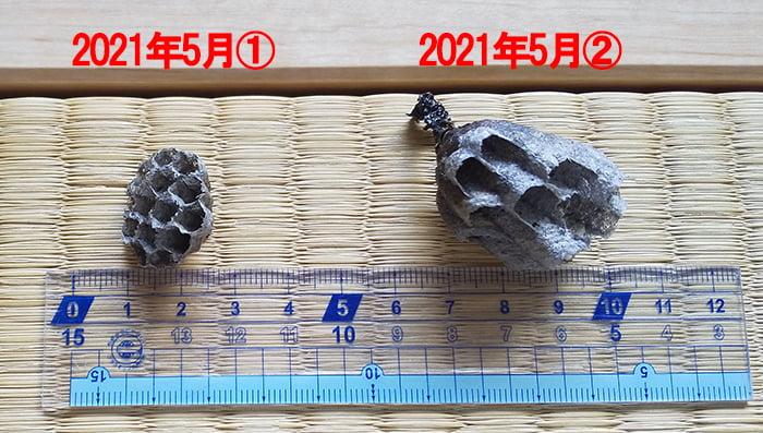2021年5月に処理したアシナガ蜂の巣3つの内の2つを撮影したコメント入り写真画像 ※右はハッカ油を使用した追い出し作戦による成果