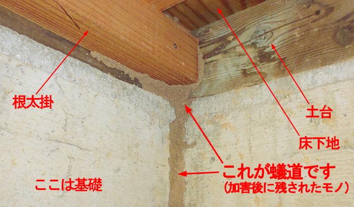 根太掛裏の土台内部がシロアリ被害に合っていると思われる、とあるお宅の床下に残されたアリ道(蟻道)を撮影したコメント入り写真画像